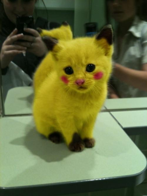 pokemon_cat