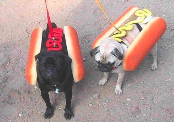 2-dog-fashion-hot-dog