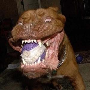 凶暴な表情の犬 6