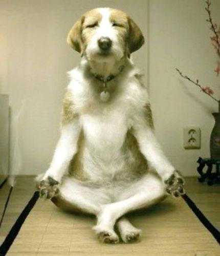 座禅する犬 | yoga dog